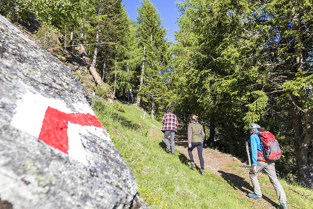 Hikers on path called Sentiero del Carbonaio, San Romerio Alp, Brusio, Poschiavo Valley, Canton of Graubunden, Switzerland, Europe - 1179-2464