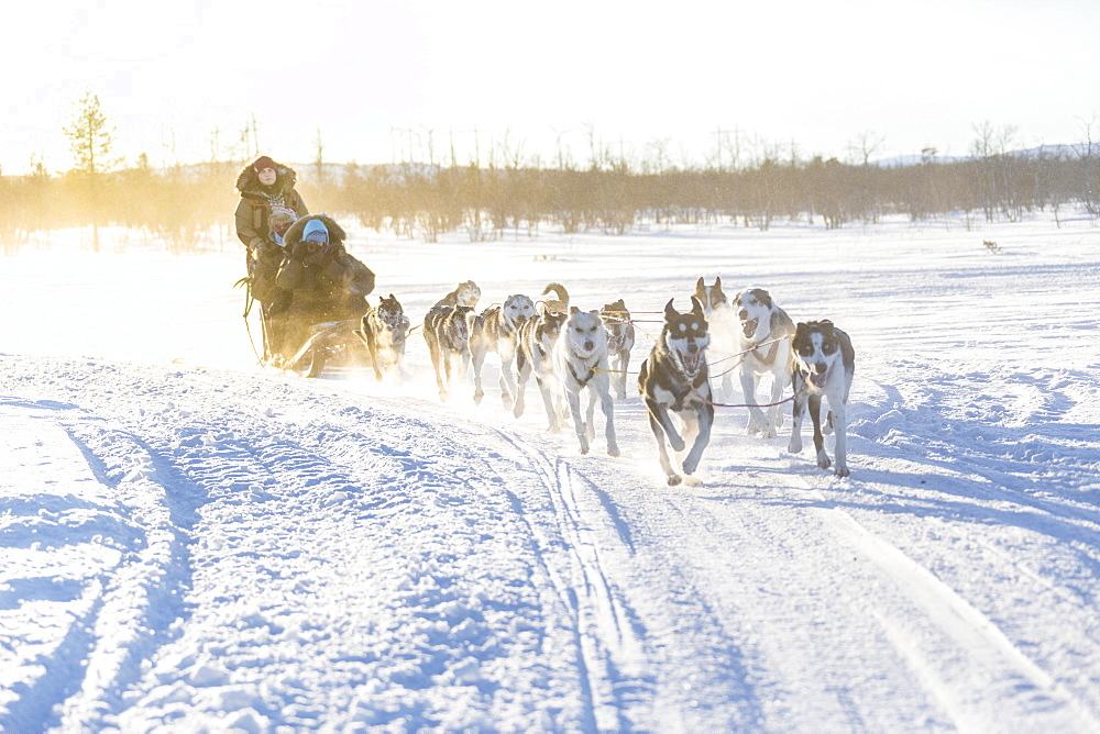 Dog sledding in the snowy landscape of Kiruna, Norrbotten County, Lapland, Sweden, Scandinavia, Europe - 1179-2489