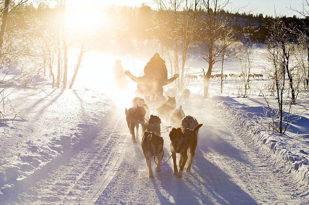 Dog sledding in the snowy landscape of Kiruna, Norrbotten County, Lapland, Sweden, Scandinavia, Europe - 1179-2491