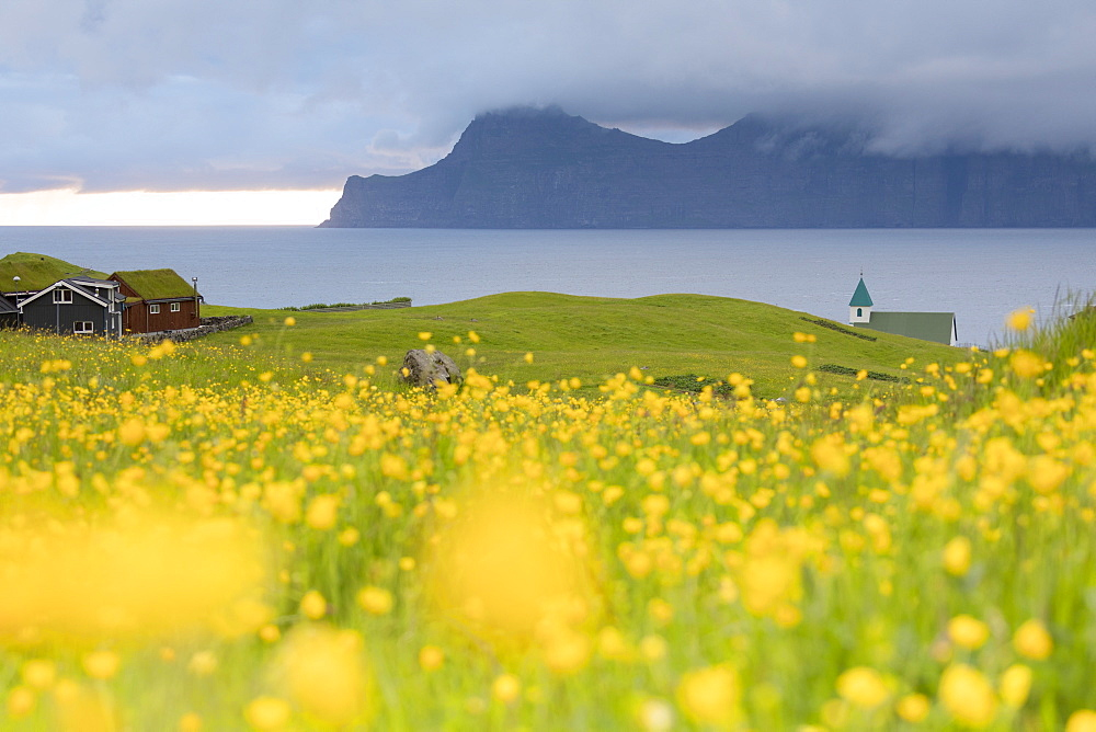 Wild flowers on hills towards Kalsoy Island seen from Gjogv, Eysturoy Island, Faroe Islands, Denmark, Europe