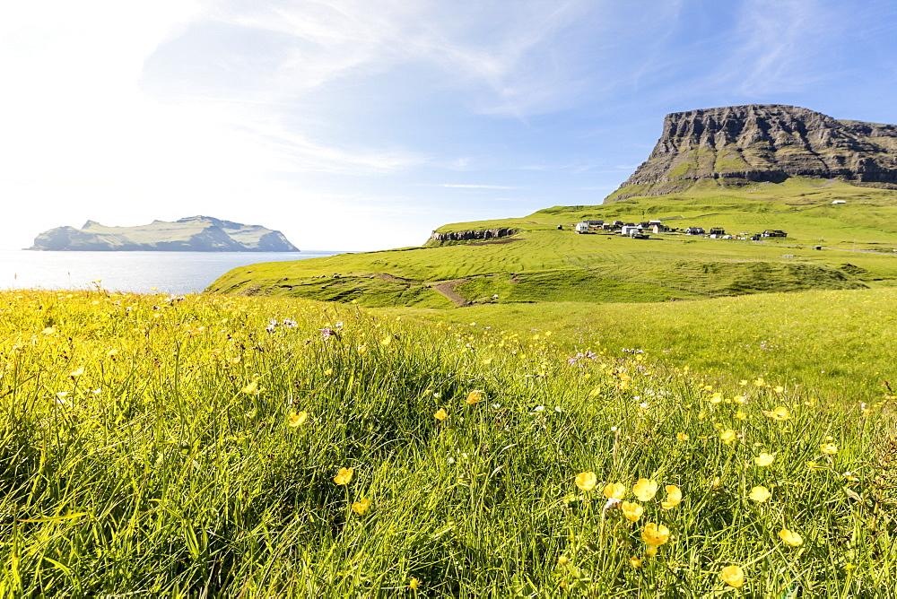 Wild flowers in the green meadows, Gasadalur, Vagar Island, Faroe Islands, Denmark, Europe