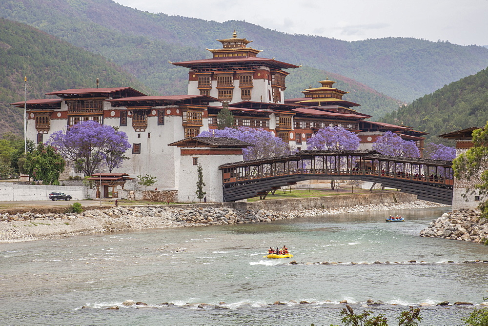 Rafting in the River Mo Chhu flowing near the Punakha Dzong where bloom the Jacaranda trees, Bhutan, Asia