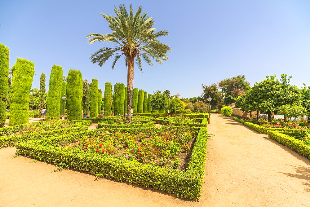 Palm trees and hedges, Jardines del Alcazar, ornamental gardens of Alcazar de los Reyes Cristianos, Cordoba, UNESCO World Heritage Site, Andalusia, Spain, Europe