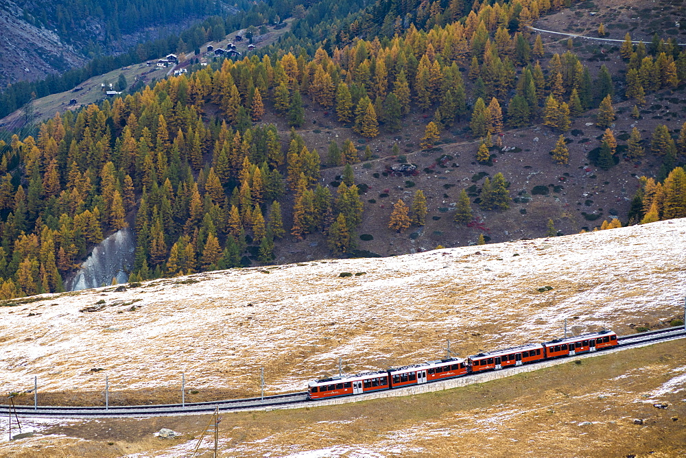 Gornergrat Bahn train runs among colorful woods in autumn, Zermatt, canton of Valais, Switzerland