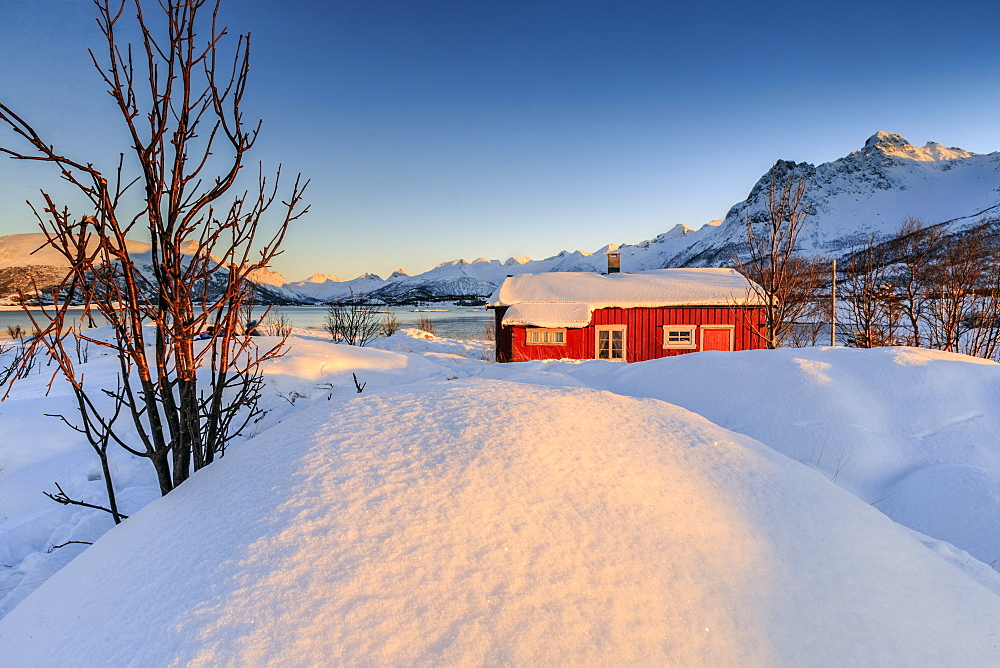 The winter sun illuminates a typical Norwegian red house surrounded by fresh snow, Svolvaer, Lofoten Islands, Arctic, Norway, Scandinavia, Europe