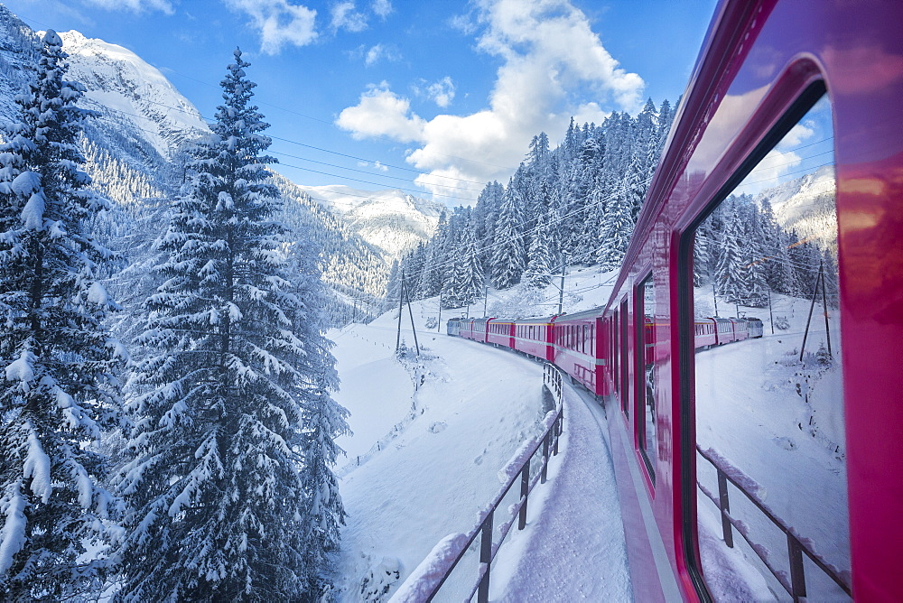 Bernina Express passes through the snowy woods, Filisur, Canton of Grisons (Graubunden), Switzerland, Europe - 1179-677