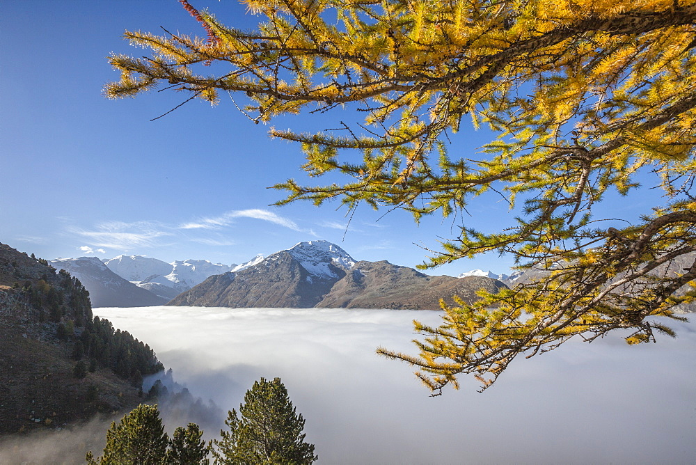 Low clouds and yellow larches frame Languard Valley, Engadine, Canton of Grisons (Graubunden), Switzerland, Europe