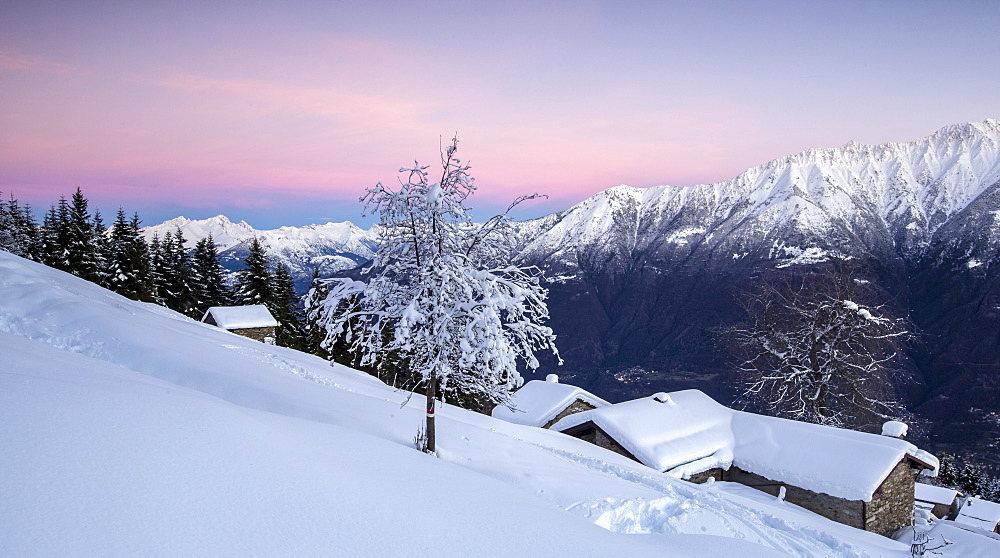 Pink sky at dawn above snow covered huts and trees, Tagliate Di Sopra, Gerola Valley, Valtellina, Orobie Alps, Lombardy, Italy, Europe