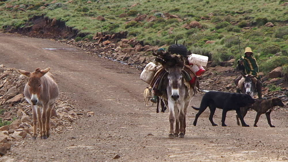 Men riding donkeys, mules, asses along a mountain road in Lesotho, A man and his dog walking with Donkeys, mules, asses carrying water containers, poles, Lesotho, Africa - 1182-117