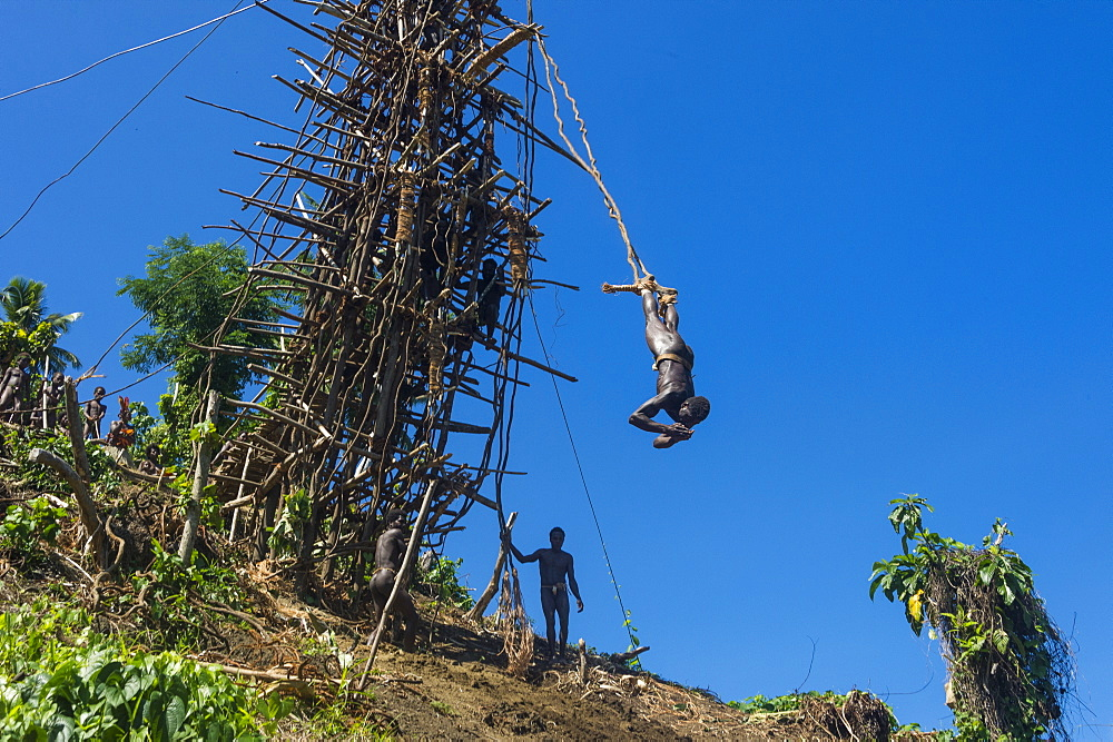 Man jumping from a bamboo tower, Pentecost land diving, Pentecost, Vanuatu
