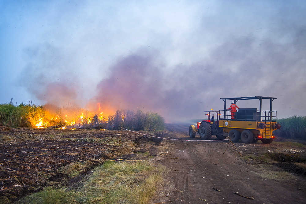 Burning sugar cane on a sugar estate, Nchalo, Malawi, Africa