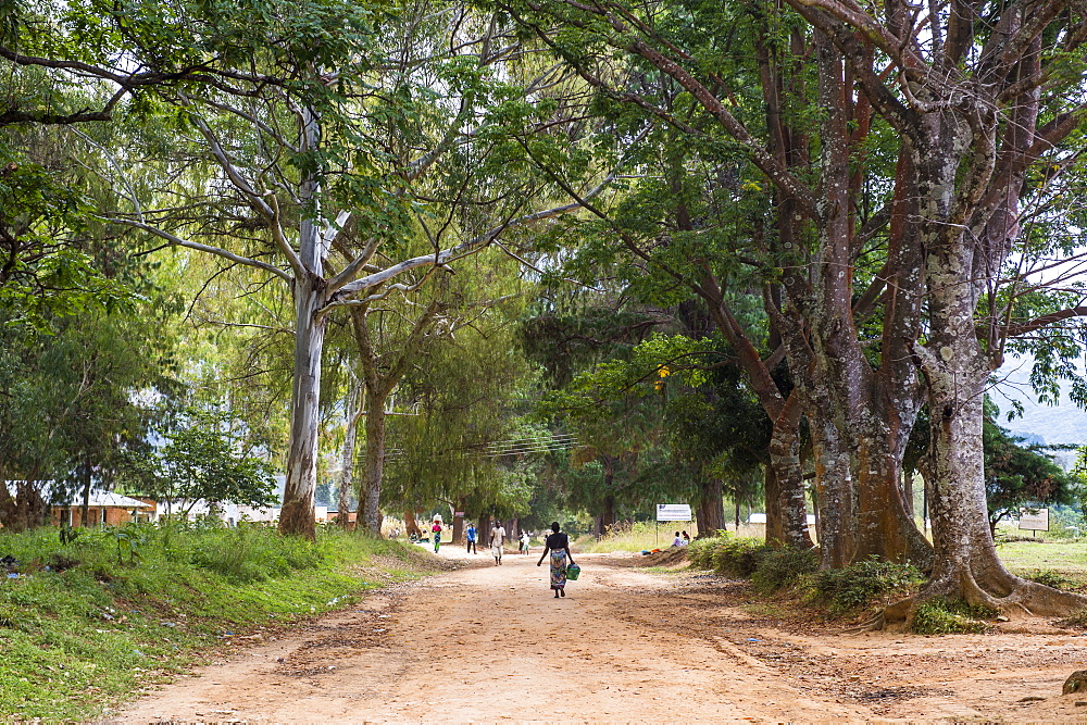 Tree alley in Livingstonia, Malawi, Africa
