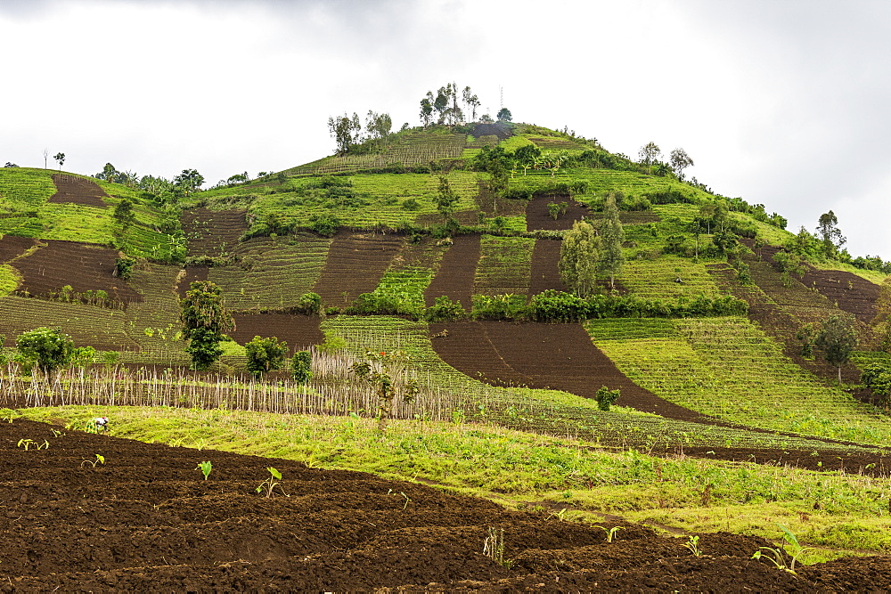 Farmland in the Virunga National Park, Democratic Republic of the Congo, Africa