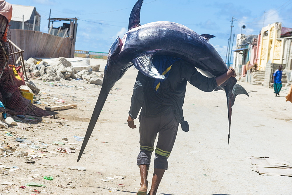 Man carrying a giant swordfish to the fishmarket of Mogadishu, Somalia, Africa
