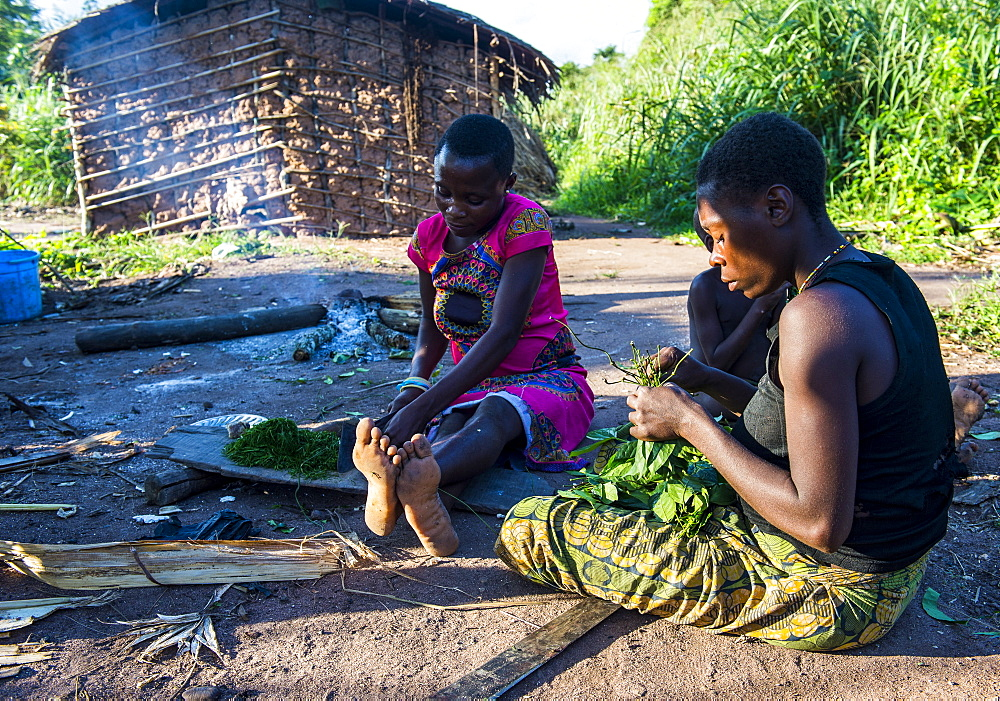 Baka pygmies preparing food in the Unesco world heritage sight Dzanga-Sangha Special Reserve, Central African Republic - 1184-2013