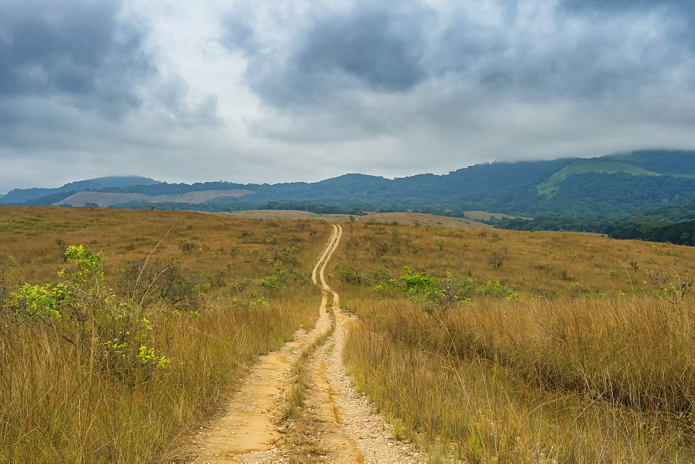 Forest track in the Unesco world heritage sight Lope national park, Gabon