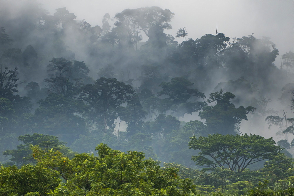 Mist rising in the rainforest around Limbe, southwest Cameroon, Africa