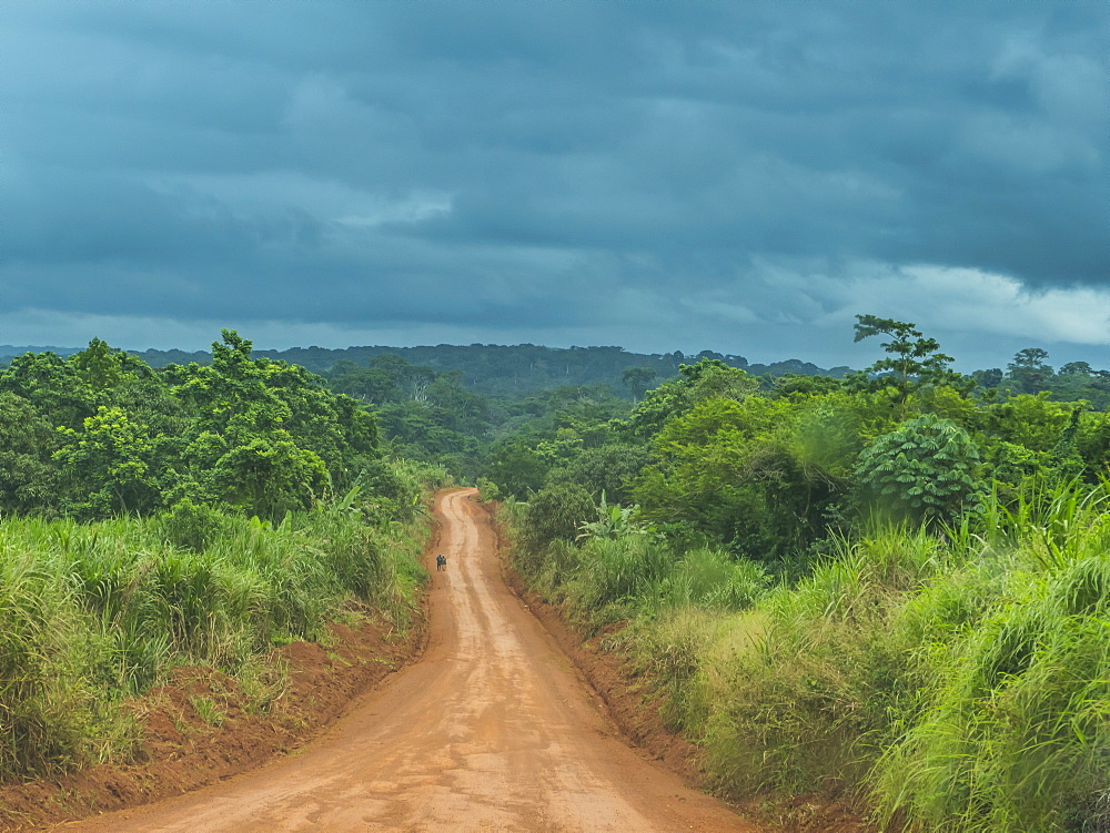 Logging road deep in the jungle of Cameroon, Africa