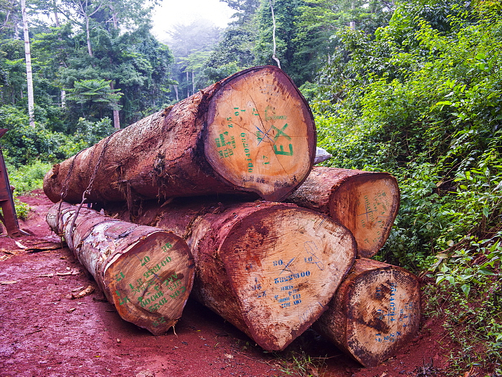 Logging truck, deep in the jungle of Cameroon, Africa