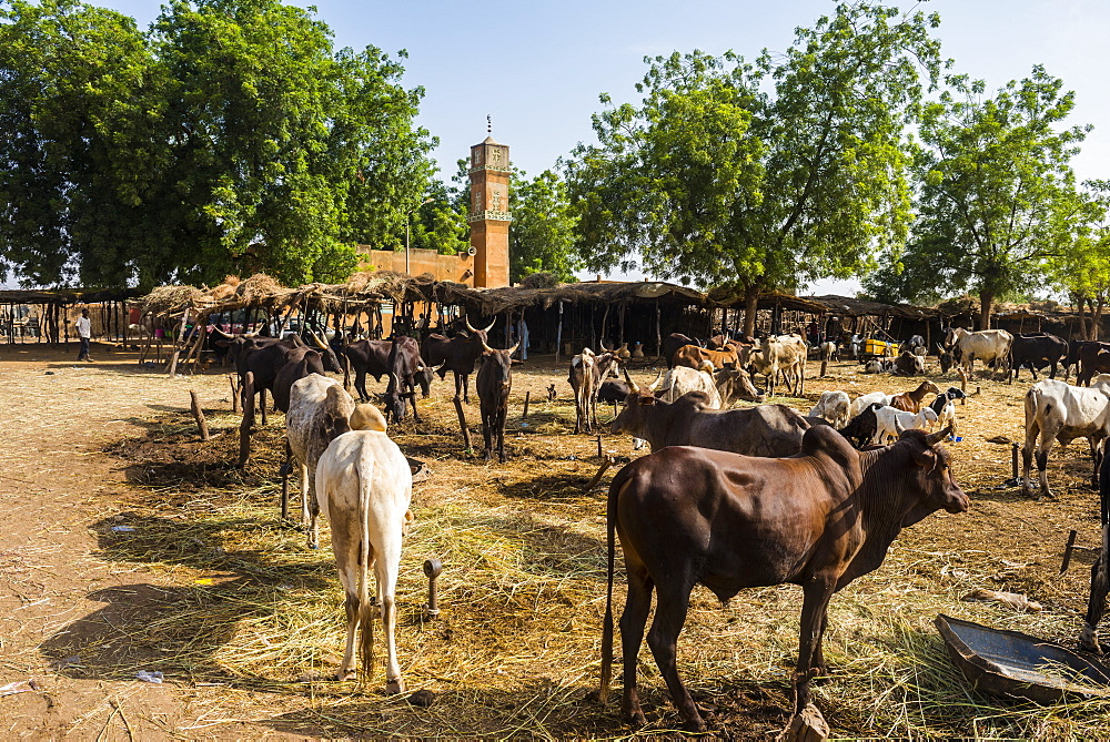Animal market in Niamey, Niger, Africa