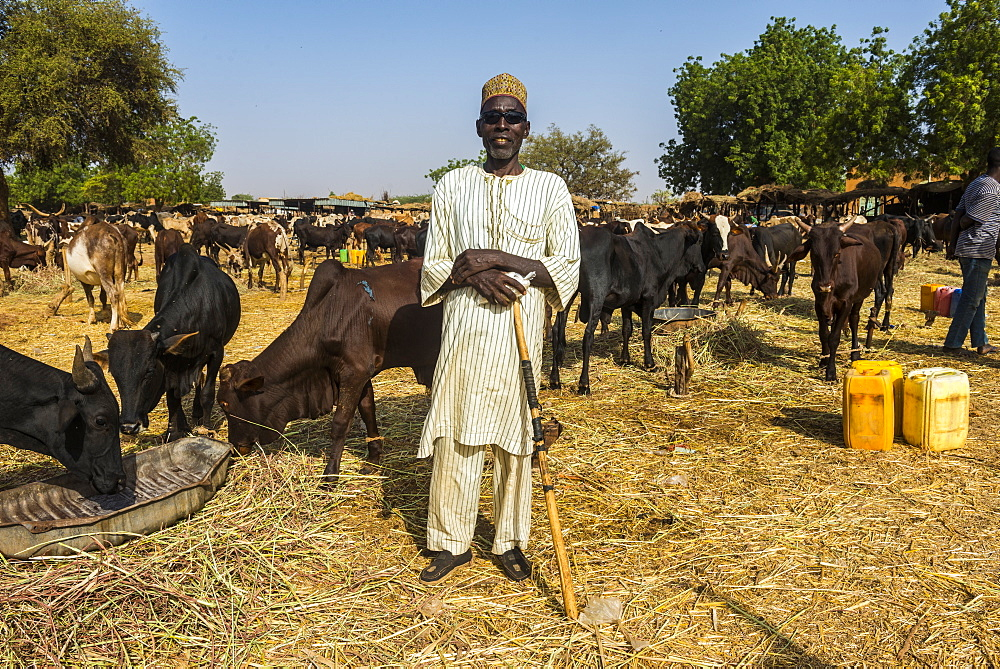 Proud farmer on the animal market in Niamey, Niger, Africa