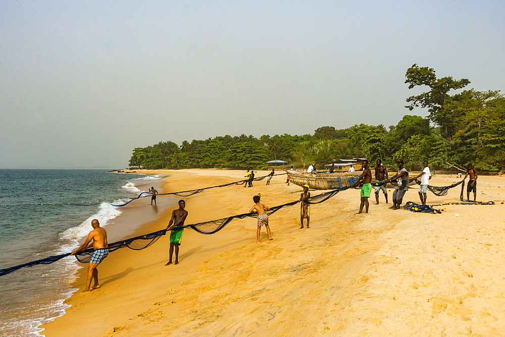Local fishermen pulling their nets on a beach in Robertsport, Liberia, West Africa, Africa