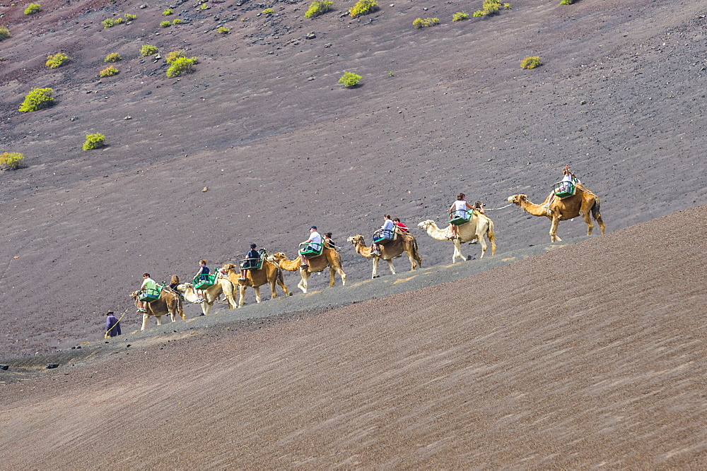 Tourist camel riding in the lava sands of Timanfaya National Park, Lanzarote, Canary Islands, Spain, Atlantic, Europe - 1184-2453