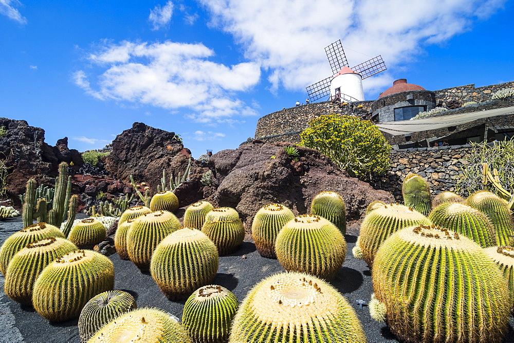 Jardin de Cactus (Cactus Garden) Cesar Manrique, Lanzarote, Canary Islands, Spain, Atlantic, Europe - 1184-2462