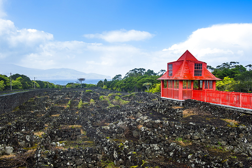 Red walkway in the UNESCO-designated historical vineyards in the Wine museum of Pico, Island of Pico, Azores, Portugal