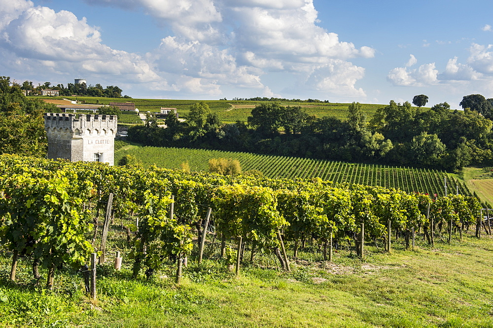 View over the vineyards, UNESCO World Heritage Site, St. Emilion, Gironde, Aquitaine, France, Europe