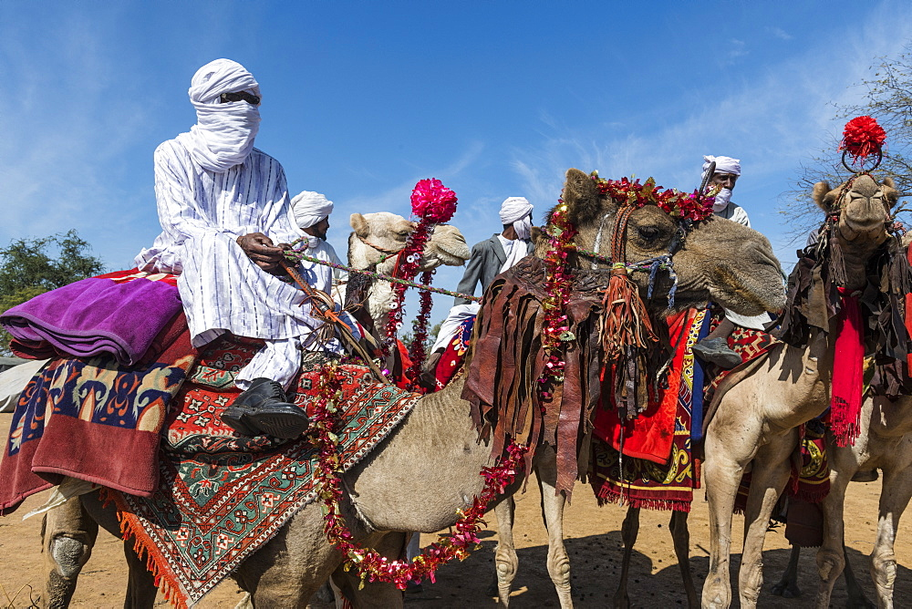 Colourful camel riders at a Tribal festival, Sahel, Chad, Africa