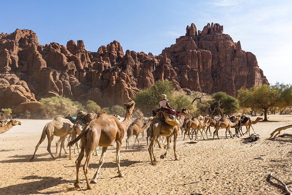 Camel caravan, Guelta d'Archei waterhole, Unesco sight Ennedi plateau, Chad, Africa - 1184-3104