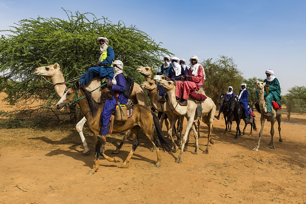 Tuaregs on their camels, Gerewol festival, courtship ritual competition among the Woodaabe Fula people, Niger