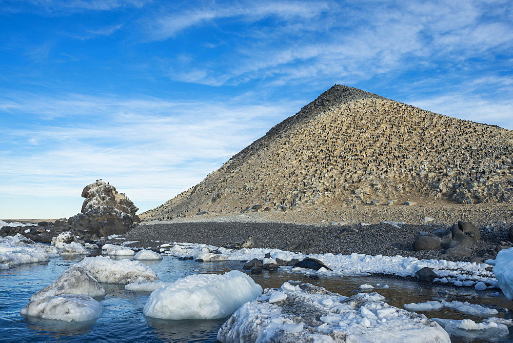 Mountain full of imperial shags (Phalacrocorax atriceps), Paulet Island, Antarctica, Polar Regions