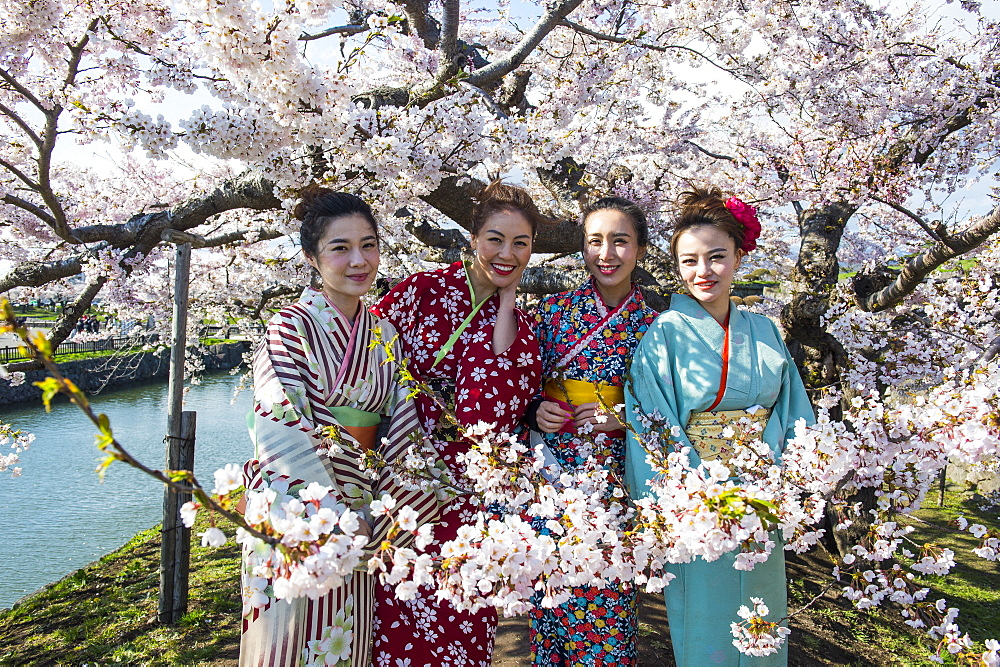 Women dressed as Geishas standing in the blooming cherry trees, Fort Goryokaku, Hakodate, Hokkaido, Japan