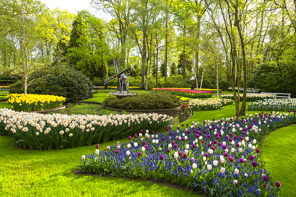 Tulips and Windmills in Keukenhof garden