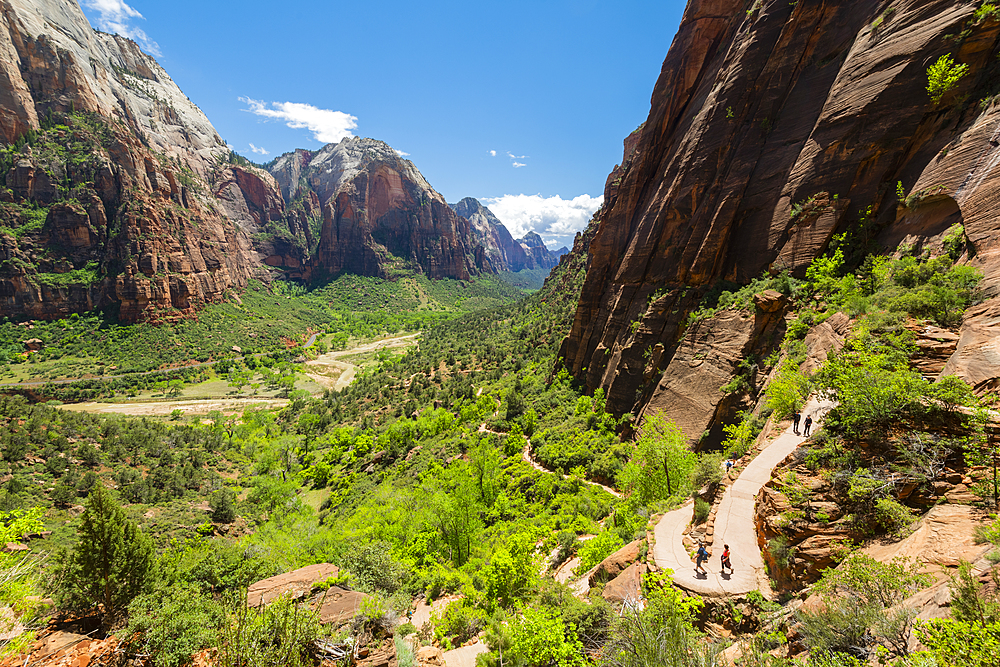 Hikers on the trail to Angels Landing, Zion National Park, Utah, United States of America, North America