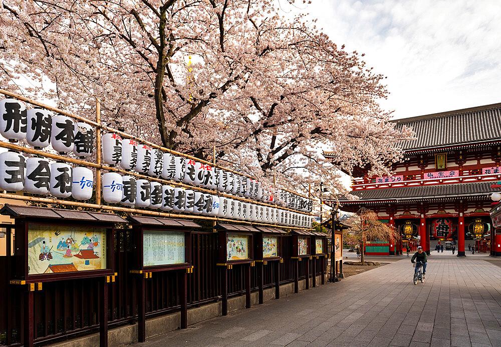 Sensoji Temple in Cherry blossom season - 1186-780