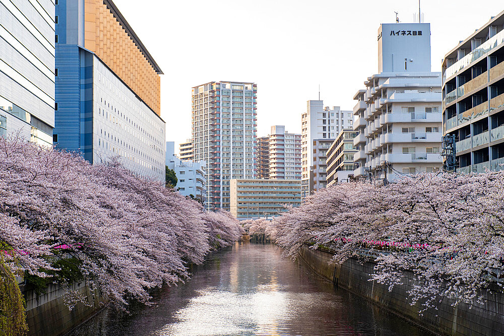 Early morning on the Meguro River - 1186-792