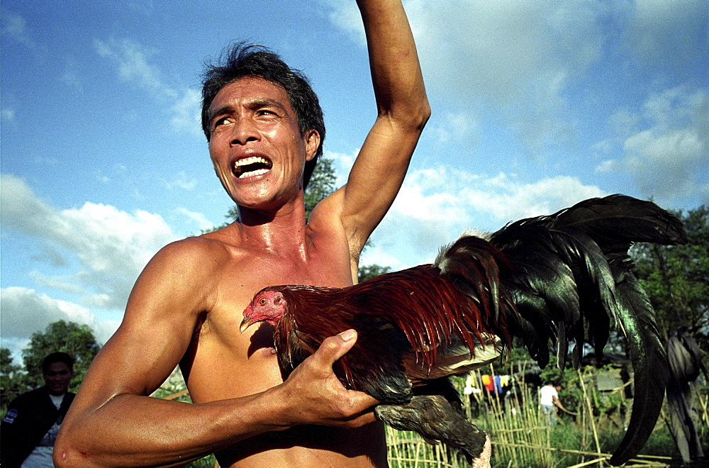 Cock fighting, philippines. Manila, payatas. Portrait of man with a fighting cock