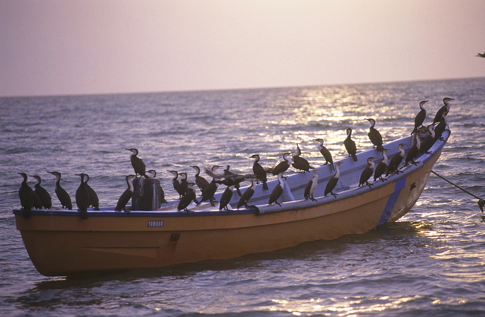 Fishing boat, mauritania. Banc darguin national park.