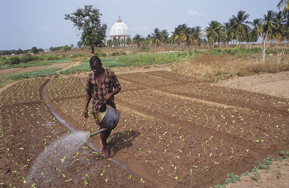 Vegetable gardening-ivory coast. Yamoussoukro - capital city. Peasant farmers work the land in front of the basilica. It cost  ì100 million