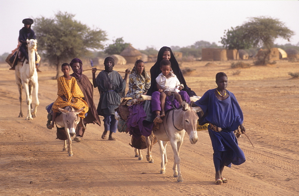 Bella nomads, burkina faso. Near gorum-gorum. Returning from market on donkeys and camels