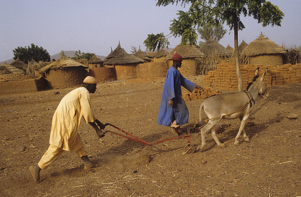 Agriculture, burkina faso. Yatenga province, kalsaka village. Ploughing the parched eroded land