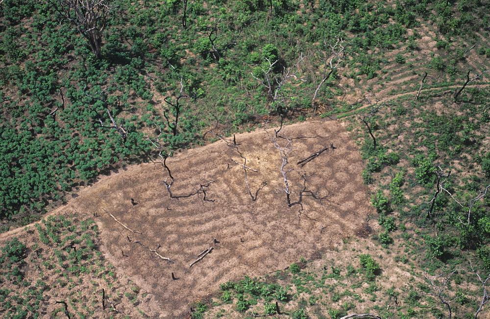 Deforestation, ivory coast. Vicinity odienne. Slash and burn farming