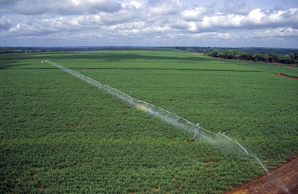 Agriculture, ivory coast. Vicinity odienne. Large scale irrigated sugar plantation.