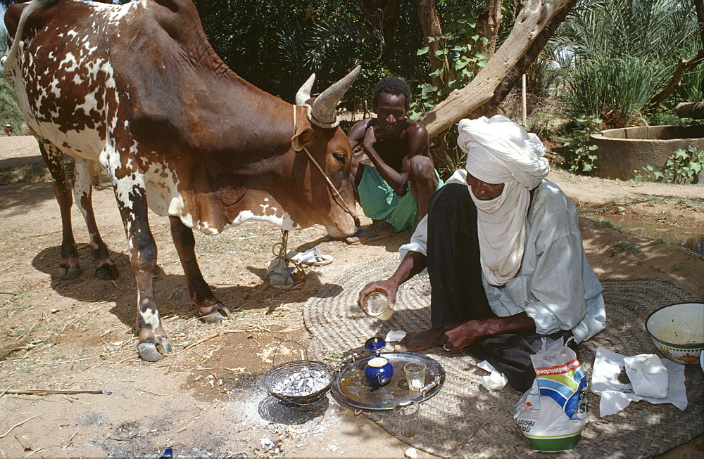 Homelife, niger (west africa). Tahoua village. Cattle herder making himself a pot of tea. The fire is made by rubbing sticks together