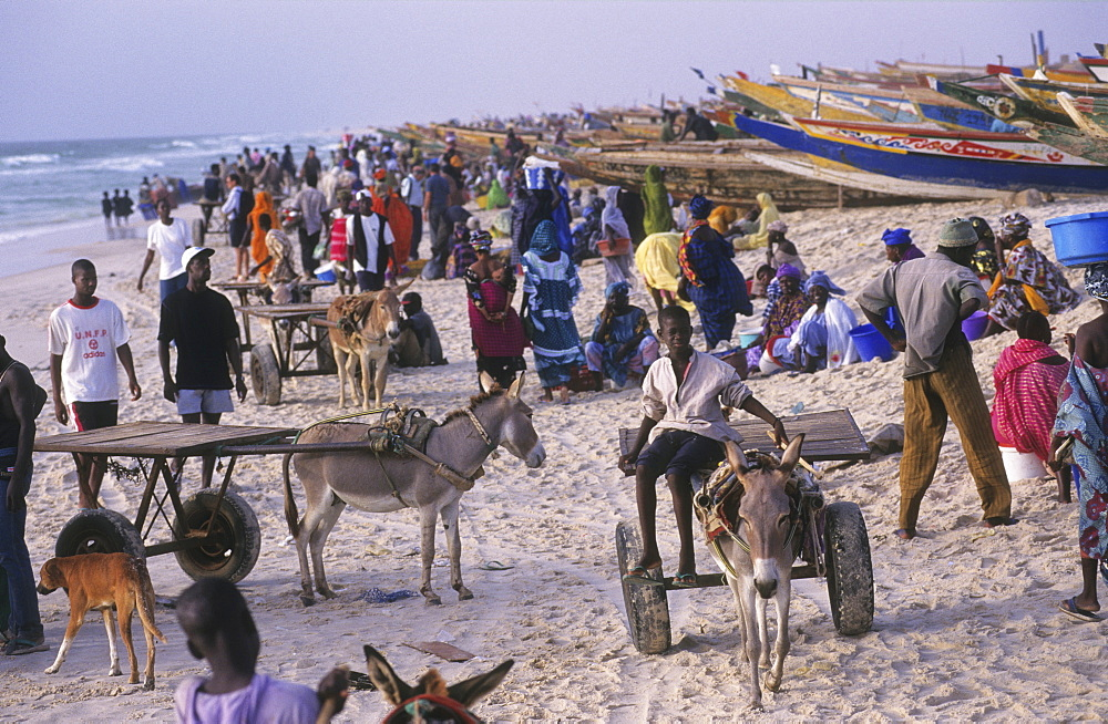Fishing, mauritania. Nouakchott. Over fishing. Landing fish on the beach. 4,000 traditional fishing boats compete for fish - the main economic activity in mauretania