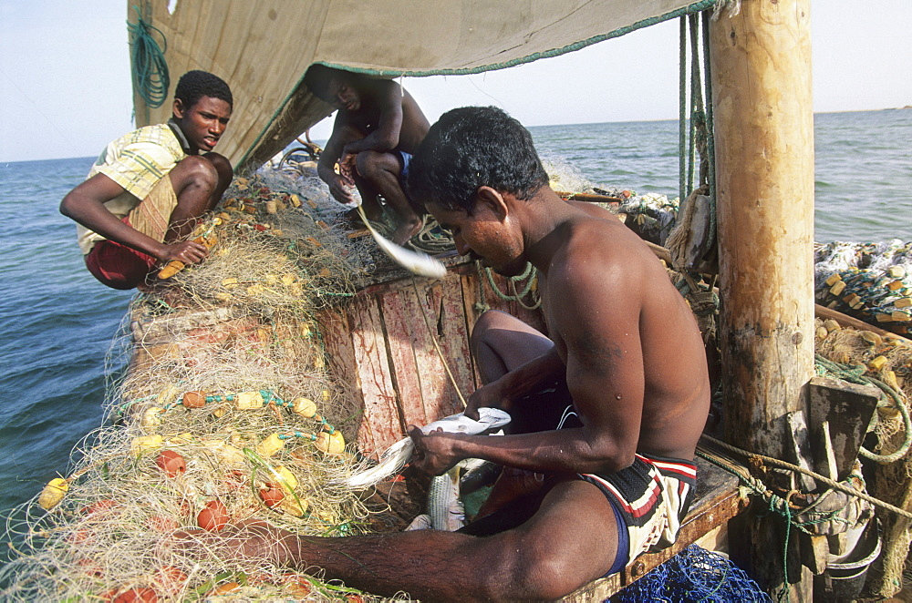 Fishermen, mauritania. Banc darguin national park. Imaraguen ethnic fishermen compete with illegal trawlers for golden mullet. Wwf are teaching them sustainable fishing practise.