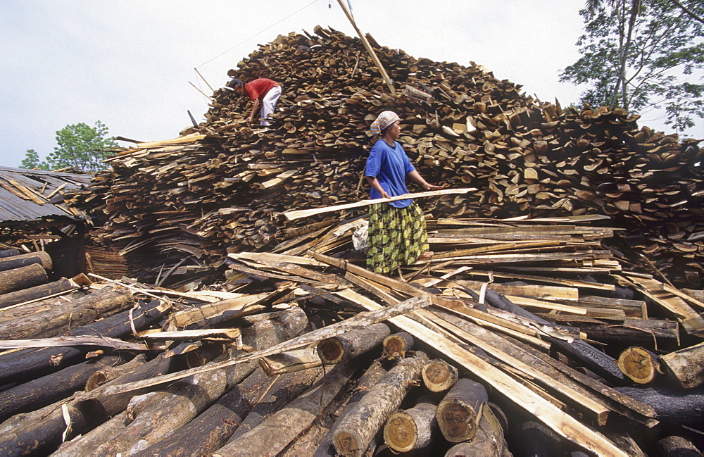 Illegal sawmill, sumatra. Nr bukit tigapuluh